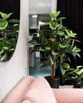 Stor grön växt bredvid snygg och mysig soffa